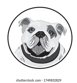 English bull dog vector design