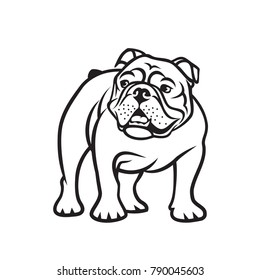 English bulldog - isolated outlined vector illustration
