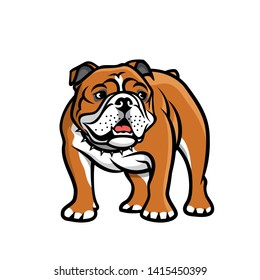 English bulldog - isolated vector illustration