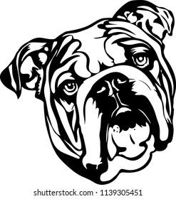 English Bulldog lap dog breed face head isolated pet animal domestic pet canine puppy purebred pedigree hound portrait peeking paws smiling smile happy art artwork illustration design set