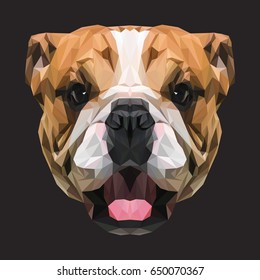 English Bulldog low poly design. Triangle vector illustration.