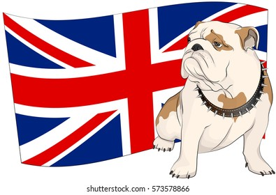 English bulldog on a background of the British flag