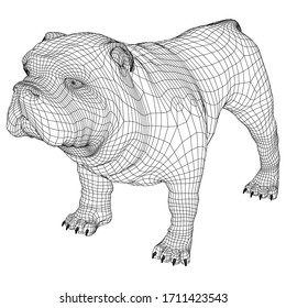 English Bulldog polygonal lines illustration. Abstract vector dog on the white background