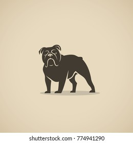 English bulldog - vector illustration