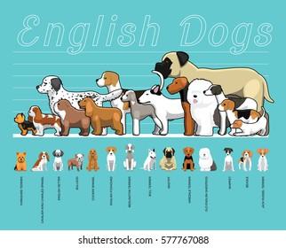 English Dogs Size Comparison Set Cartoon Vector Illustration