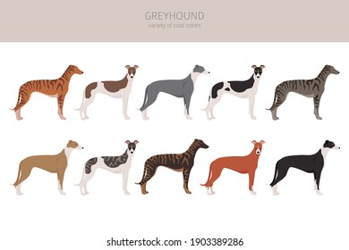 English greyhound dogs different coat colors. Greyhounds characters set.  Vector illustration