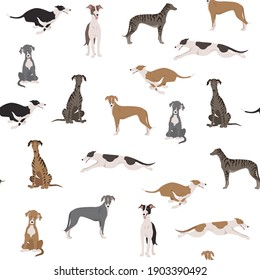 English greyhound dogs in different poses. Greyhounds seamless pattern.  Vector illustration