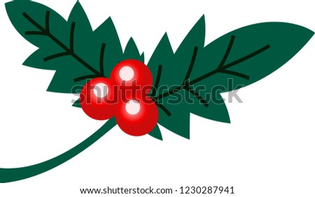 English Holly Leaves Fruits Stock Vector (Royalty Free