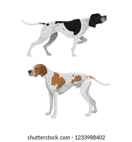 English pointer dogs black and white and orange and white coloring. Vector illustration isolated on white background