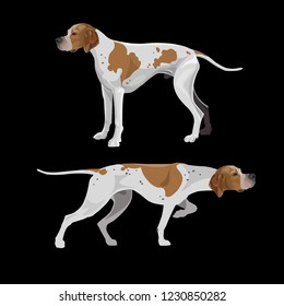 English pointer dogs orange and white coloring. Vector illustration isolated on black background