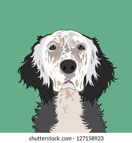 English setter, The buddy dog