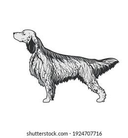 English setter dog breed - isolated vector illustration