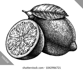 Engrave isolated lemon hand drawn graphic vector illustration