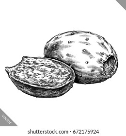 Engrave isolated prickly pear hand drawn graphic vector illustration