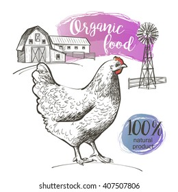 Engraved Chicken and a farm. Vector illustration