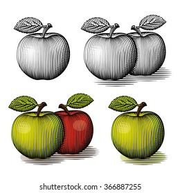 Engraved green and red apple. Vector engraved illustration.