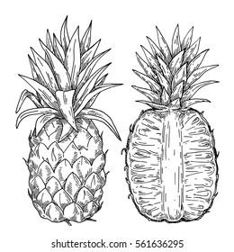 Engraved pineapple style illustration. Image of pineapple fruit. Vector black and white illustration.