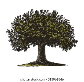 Engraved tree.  Vector illustration of a fruit tree in vintage engraving style. Isolated, grouped.