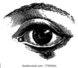 Engraved vector eye from atlas published in 1851 (The iconographic encyclopedia of science, literature and art). Other illustrations in my portfolio.