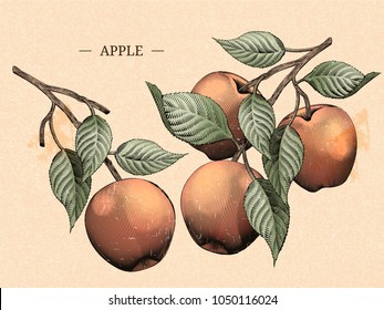 Engraving apples with leaves, natural fruit elements