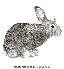 Engraving black and white rabbit. Isolated on white background.