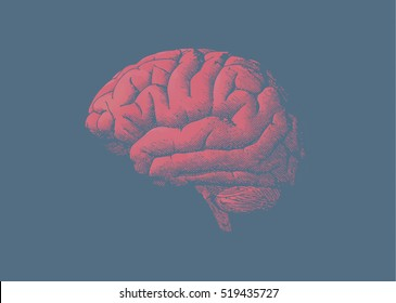Engraving brain illustration with tint red color on tint dark blue background