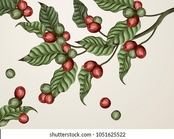 Engraving coffee plants, vintage decorative leaves and coffee cherries for design uses