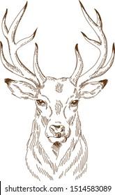 engraving drawing vektor of deer