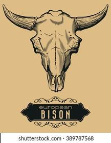 Engraving European Bison Skull