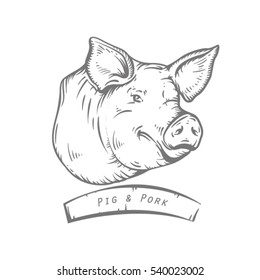 Engraving head of pig. Sketch of pig's head. Pork.Engraved boar. Pork.mamal engraved image. Funny pig.  sketch ink pigs.Ofort of pig. Logo or label with pig.