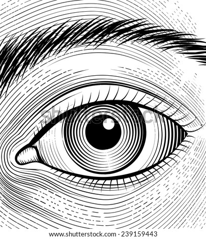 Engraving Human Eye Sketch Eyes Closeup Stock Vector Royalty Free