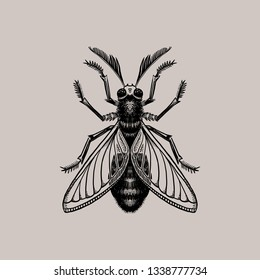 Engraving insect. Isolated on gray background. Hand drawn illustration. Black ink. Great for tattoos, t-shirt printing, for Halloween and more.