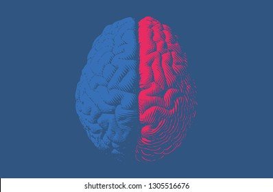 Engraving left and right hemispheres brain illustration in top view isolated on blue background