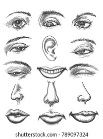 Engraving lips and ear, eye and nose. Vintage sketch human organs like eyeball and kiss or mouth, hand drawn eyes and ears vector illustration