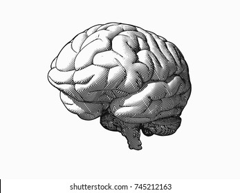 Engraving monochrome brain in oblique perspective view isolated on white background