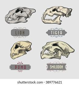 Engraving Predatory Animals Skulls Set - Lion, Tiger, Puma, Prehistoric Tiger
