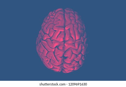 Engraving red pink human brain on top view crosshatch drawing isolated on dark blue background