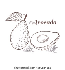 Engraving style avocado with leaf and slice vector illustration