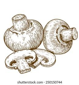 engraving vector illustration of champignons on white background