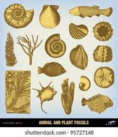 """Engraving vintage Fossils set from """"The Complete encyclopedia of illustrations"""" containing the original illustrations of The iconographic encyclopedia of science, literature and art, 1851. Vector."""