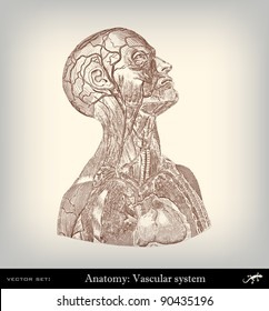 """Engraving vintage vascular system from """"The Complete encyclopedia of illustrations"""" containing the original illustrations of The iconographic encyclopedia of science, literature and art, 1851. Vector."""