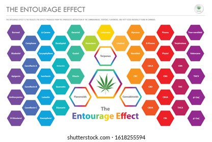 The Entourage Effect Overview horizontal business infographic illustration about cannabis as herbal alternative medicine and chemical therapy, healthcare and medical science vector.