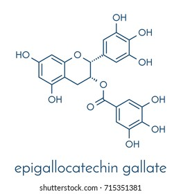 Epigallocatechin gallate (EGCG) green tea polyphenol molecule. Has antioxidant properties and may contribute to health effects of tea. Skeletal formula.