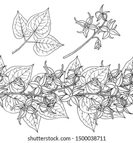 Epimedium (Horny Goat Weed, yin yang huo). Seamless border, garland. Hand drawn vector illustration in sketch style.
