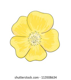 Eps 10 colorful vector illustration of yellow dog rose flower