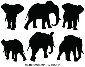 Eps 10 Set of editable vector silhouettes of African elephants in walk poses