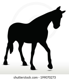 EPS 10 Vector - horse silhouette in Walking Head Down position