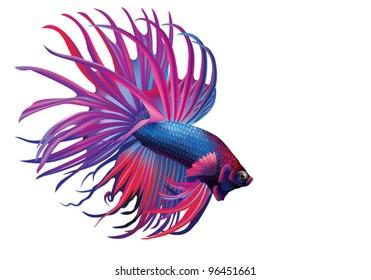 EPS 8/ Rumble Fish, or Cockerel [Betta splendens]