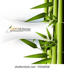 eps10 abstract vector elegant bamboo concept design