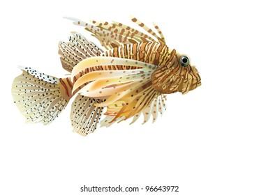 EPS10/ Yellow Sea cock-TRIGLA [Trigla lucerna]